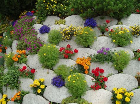 Garden Flowers Tagetes As The Best Garden Decor Hum Ideas Summer Garden Flowers