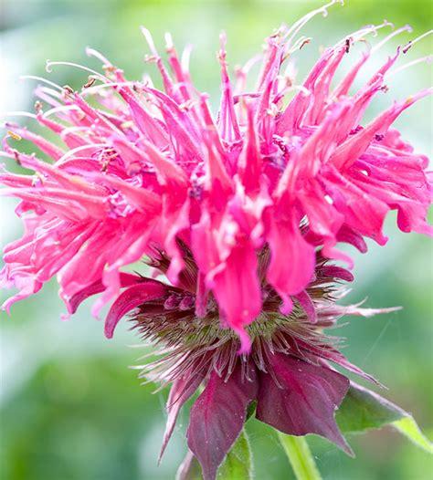 Die Sch Nsten Schmetterlinge 4950 by Die Sch 246 Nsten Rosa Blumen Im Garten Anbauen Gartengestaltung