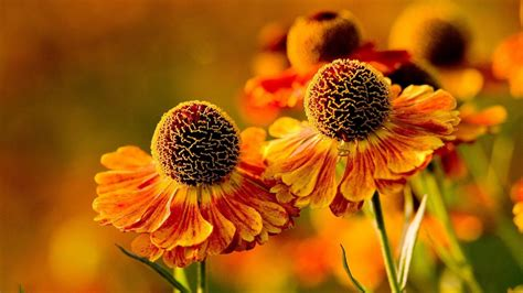 flower wallpaper download for mobile orange flowers hd wallpaper download for mobile