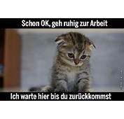 Katze Traurig  Hifi Forumde Bildergalerie