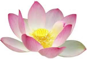 Real Lotus Flower Free Clipart Lotus Flower Silhouette Gfergus