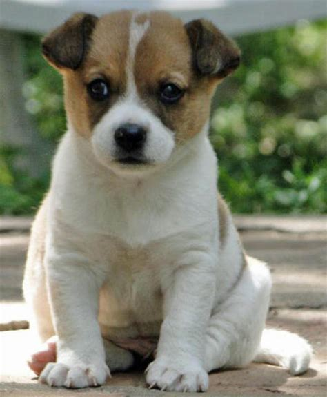 Puppies Puppy Names Pictures Of Puppies More Daily Puppy
