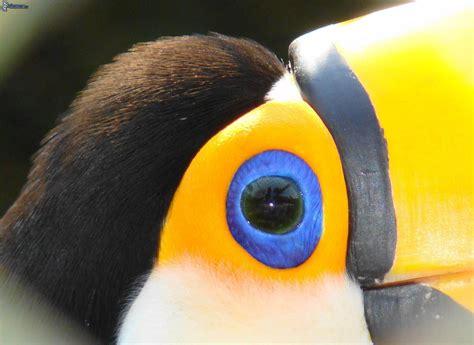 Toucan L by Toucan