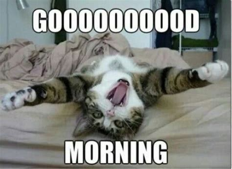 Funny Morning Memes - top 30 funny good morning quotes quotes and humor