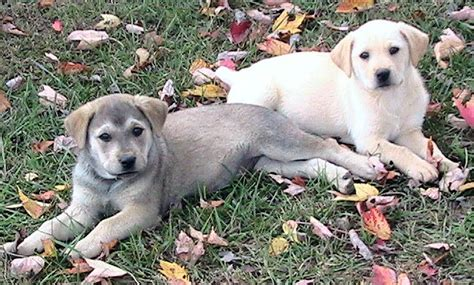 two puppies pictures of dogs www imgkid the image kid has it