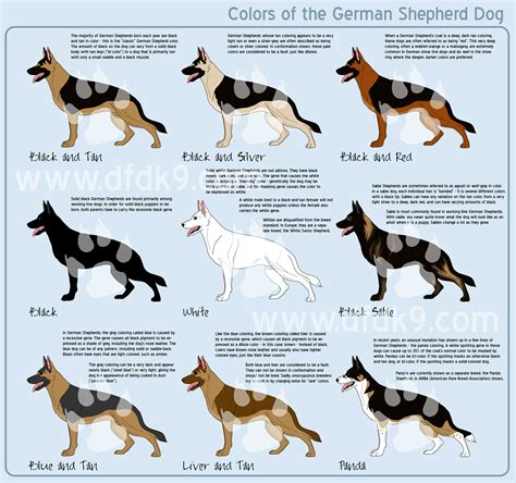 german shepherd color changes color and patterns den sturmfalken