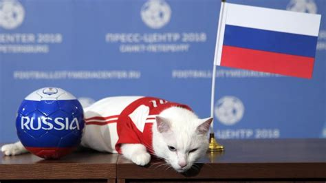 fifa world cup 2018 result achilles the cat picks russia to win fifa world cup 2018