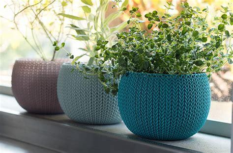 showcase  greenery   stylish planters