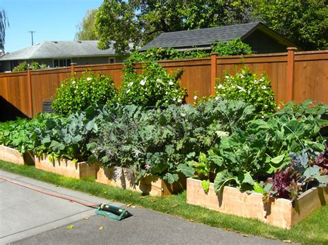 Raised Beds And False Economies Best Small Vegetable