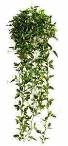 Garden Foliage Plants - artificial flowers amp christmas decorations aero amp aeroflora artificial foliage plant amp tree