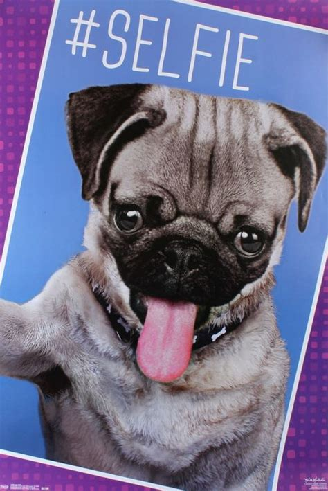 pug selfie buy pug selfie poster from our prints range tesco