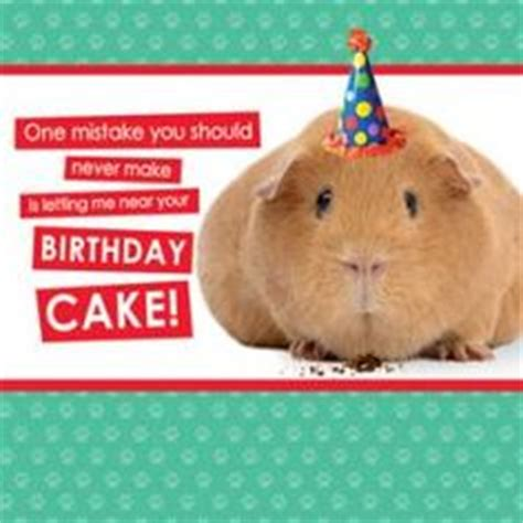Happy Birthday Guinea Pig Card 1000 Images About Tess Guinea Pig Party On Pinterest