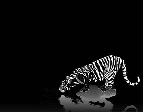 cool black and white backgrounds cool black and white wallpapers wallpapersafari