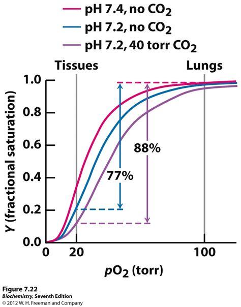 bohr effect diagram kevin ahern s biochemistry bb 450 550 at oregon state