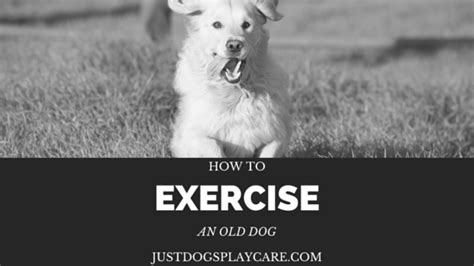 how to exercise a puppy how to exercise an
