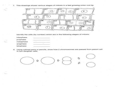 Mitosis And Meiosis Worksheet Answers