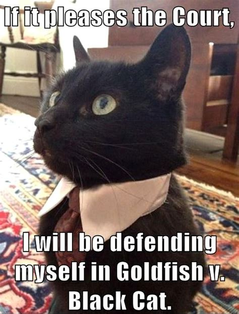 Lawyer Cat Meme - funny legal cartoons 171 best lawyer jokes and cartoons