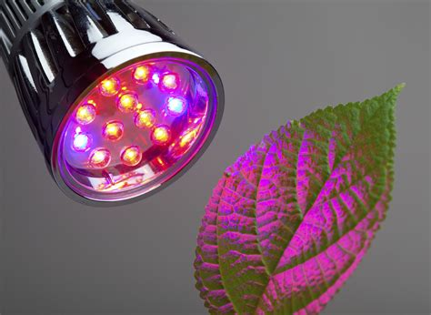 plant light light or blue light for plants effects of and