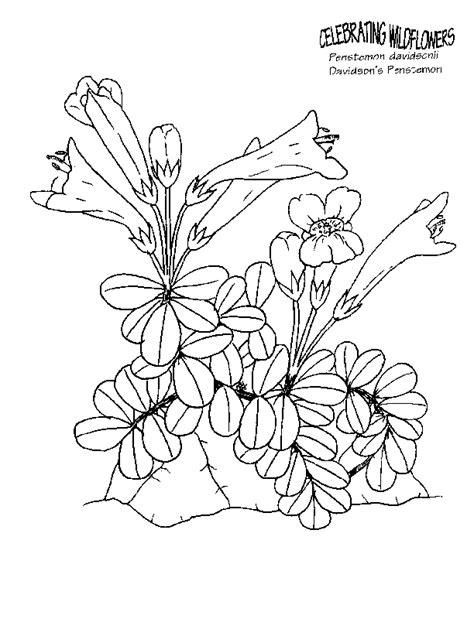 Botany Coloring Pages botany coloring pages coloring home