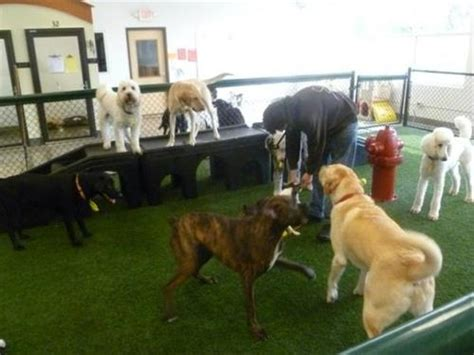spa paw tail premier pet resort  daycamp doggy day