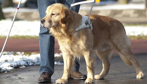 puppy everywhere 5 amazing stories proving how dogs help