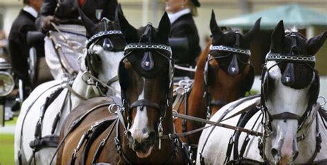 carrozze per cavalli in vendita moirano finimenti per cavalli e carrozze dal 1930