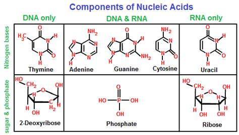 nucleic acid diagram got science abiogenesis how began