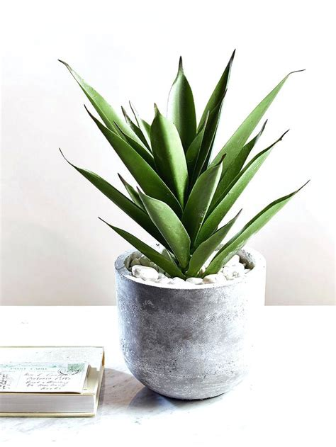 indoor plants india indoor plant pots online uk buy indoor plant pots online