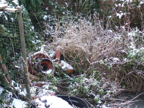 backyard winter gardening winter garden plants what can be grown in your garden