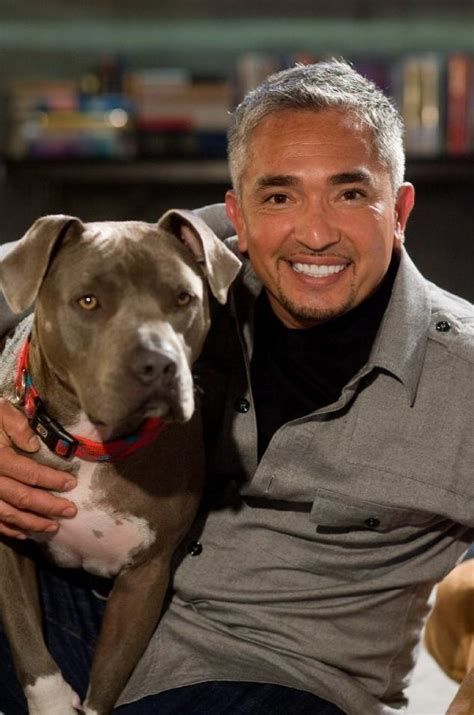 cesar millan puppy cesar cesar millan photo 15821346 fanpop