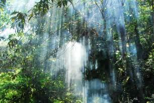 What Plants Grow In The Tropical Rainforest - orangutan land trust orangutans