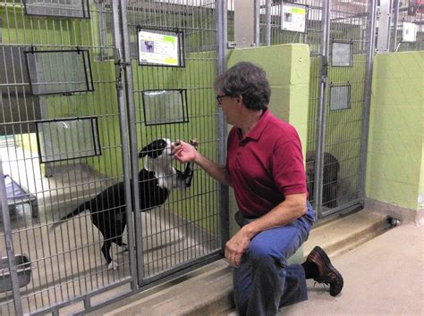 adoptions outpace euthanasia  pet shelter   time orlando sentinel