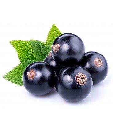 Currant Berry Liquid 30ml buy black currant juice powder znaturalfoods