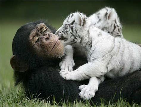 imagenes animal x crear conciencia amor animal x