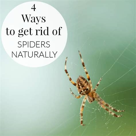 best 28 how to get rid of spiders in tree ways to get rid of spiders i