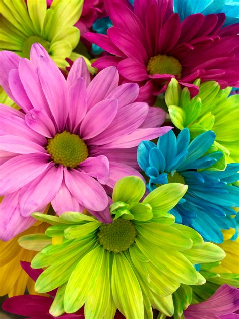 Flower Up pink yellow petaled flower in up 183 free