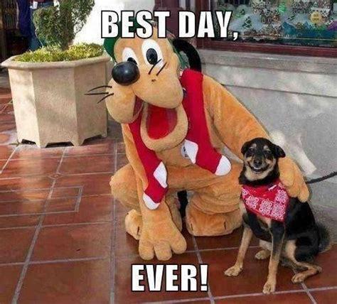 besta day this dog who met goofy is having the best day ever weknowmemes