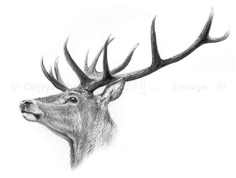 Stags Head Home Decor by 198 Best Images About Deer Sketches On Pinterest A Deer