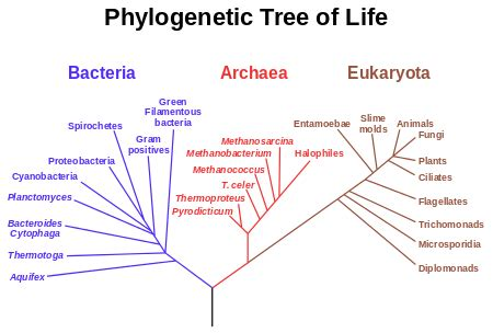 define tree phylogenetic tree