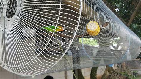 Tebok Kandang Kapsul lovebird umbaran ala topik