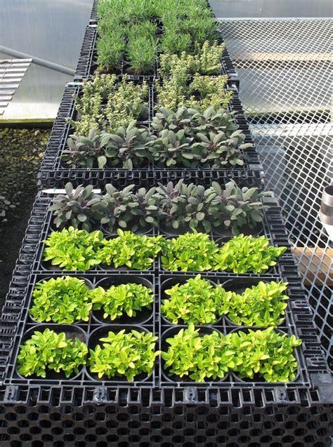 Vertical Garden Maintenance Vertical Herb Garden Nifty Homestead