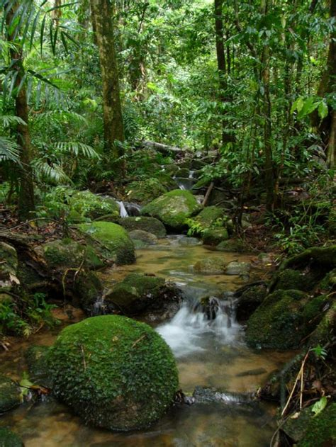 por una gentil floresta 8426374646 hermosos paisajes de brasil