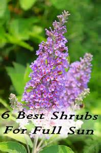 6 best shrubs for full sun homemade by jaci