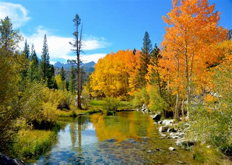 bets  fall foliage   bay area  northern