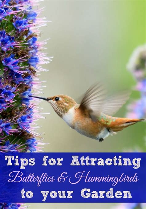 1000 ideas about attracting hummingbirds on pinterest