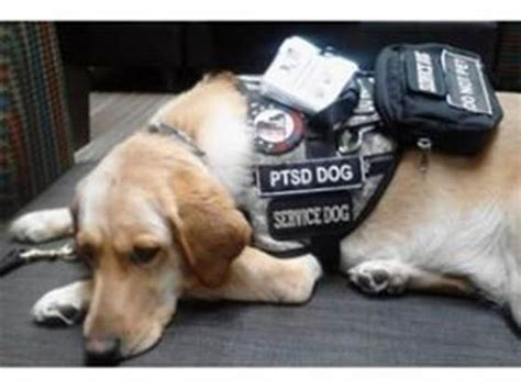 ptsd therapy dogs help mike get a ptsd service veterans youcaring
