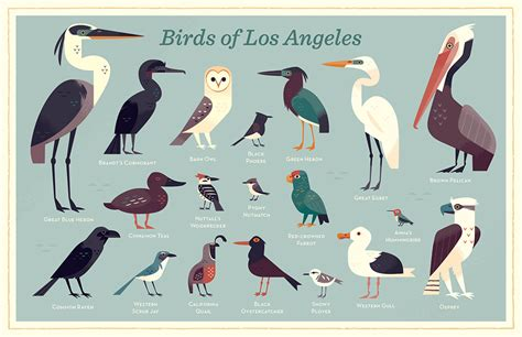 birds of los angeles alexander vidal illustration
