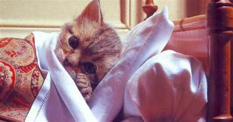 kitten in bed cheap pet insurance 26 questions to ask before you buy band of cats
