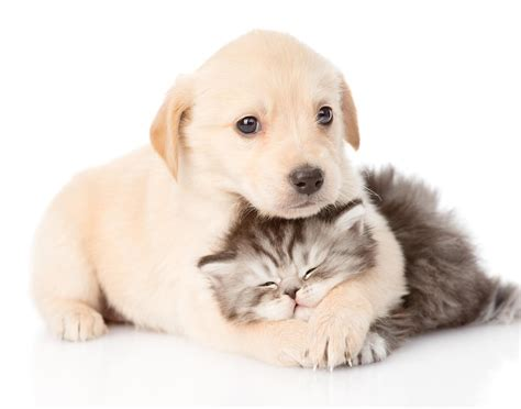 pet insurance nationwide vpi pet insurance warning