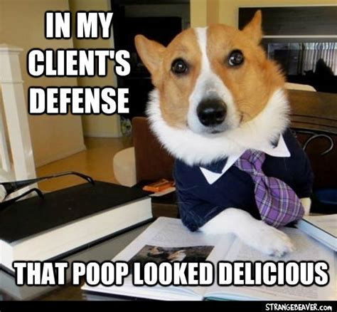Lawyer Dog Meme - lawyer dog meme strange beaver